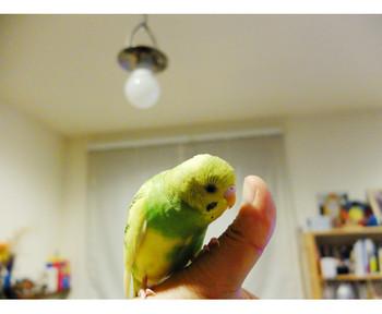 K6242016chirosuke
