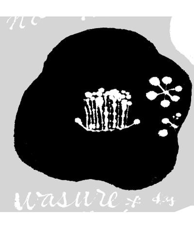 K922017tsubaki